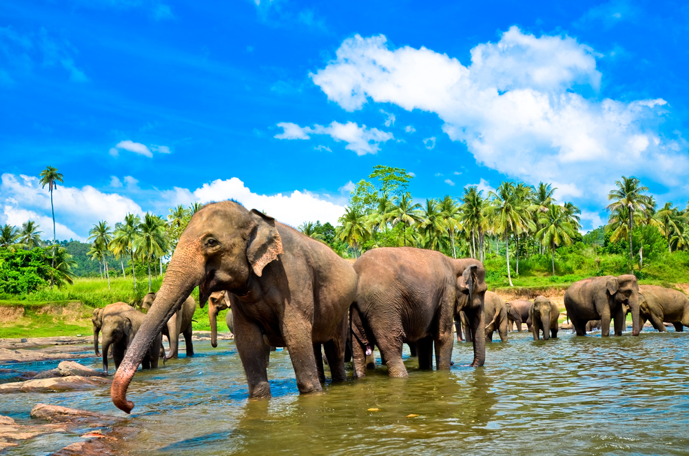 Holiday packages Sri Lanka